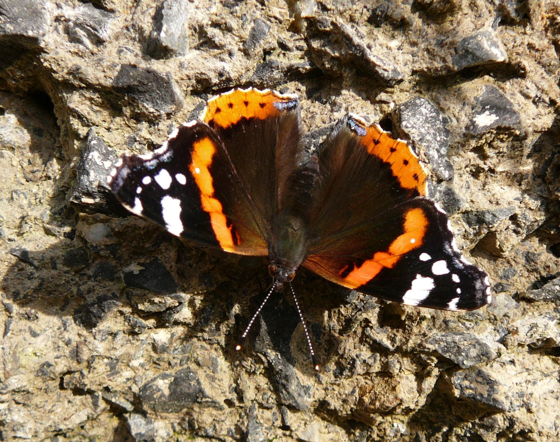 Motýl u jezerní panny